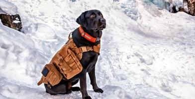 An in depth review of the best dog vests in 2018