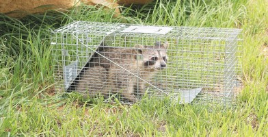 An in depth review of the best animal traps in 2018