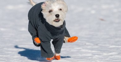 An in depth review of the best dog boots in 2018