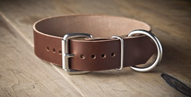 An in depth review of the best leather dog collars of 2018