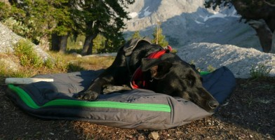An in depth review of the best dog beds of 2018