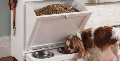 An in depth review of the best dog feeders in 2018