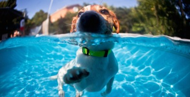 An in depth review of the best waterproof dog collars of 2018