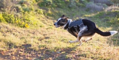 An in depth review of the best dog harnesses in 2018