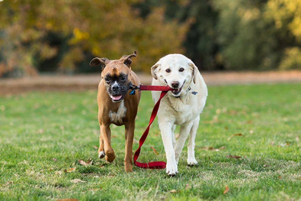 An in depth review of the best dog leashes in 2018