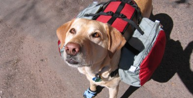 an in-depth review of the best dog backpacks of 2018
