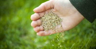 An in depth review of the best grass seeds in 2018