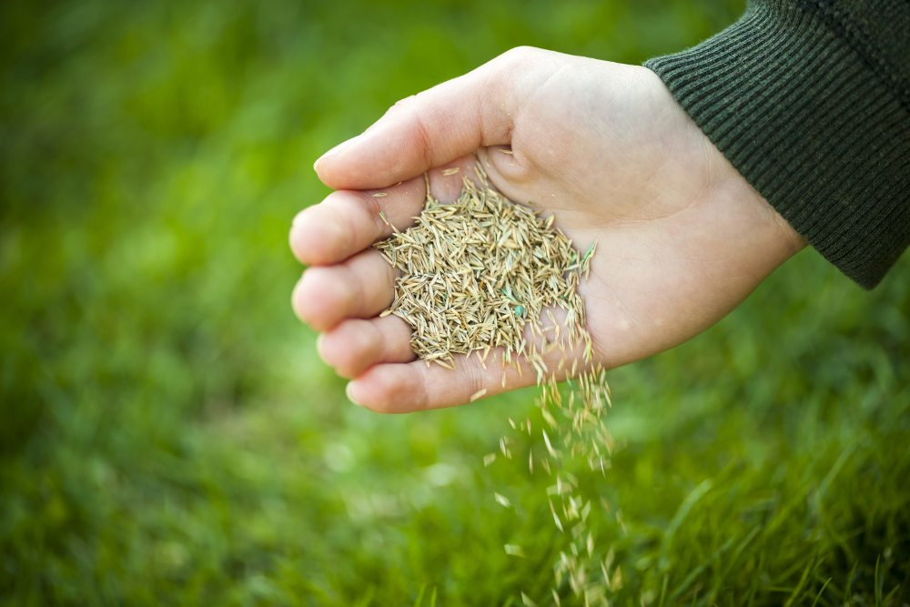10 Best Grass Seeds Reviewed Tested In 2020 Thegearhunt