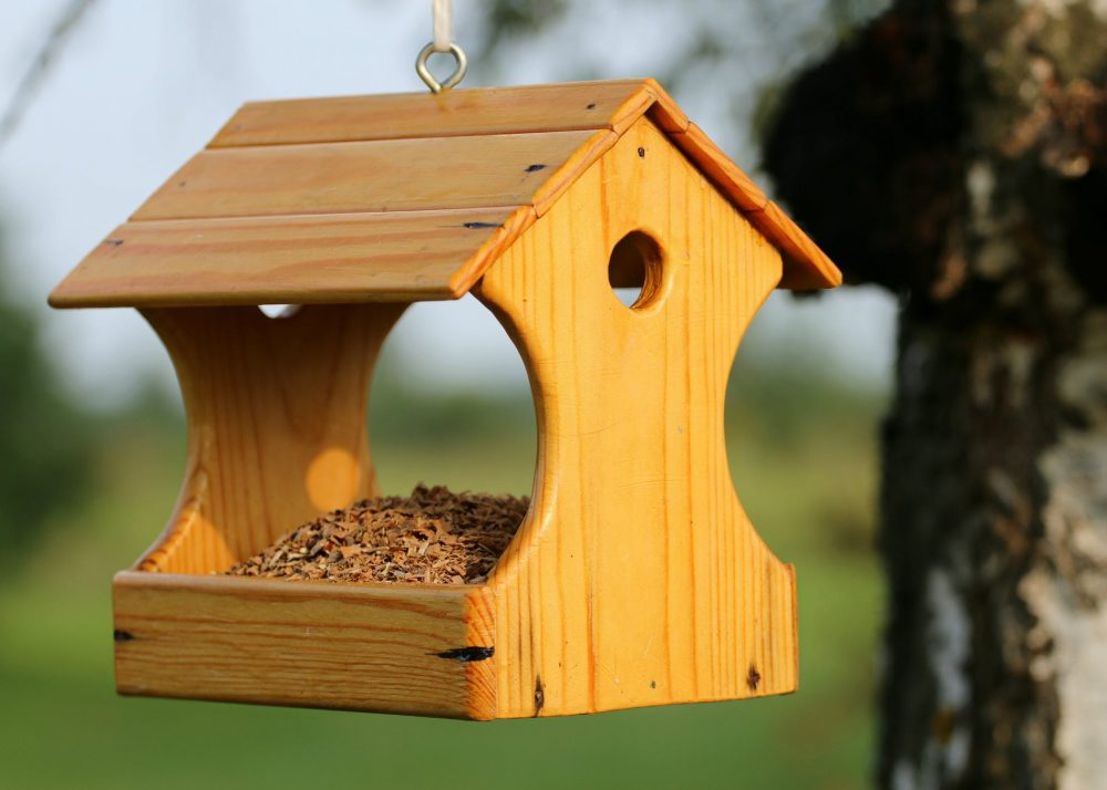 an in-depth review of the best birdhouses of 2019