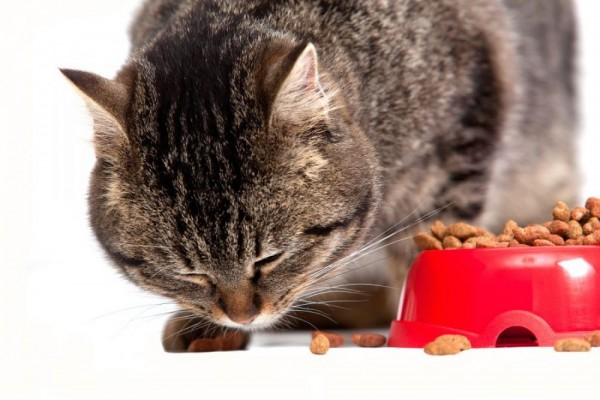 An in depth review of the best dry cat foods