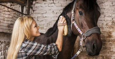 An in depth review of the best horse brushes in 2018