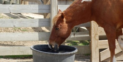 An in depth review of the best horse water buckets in 2018