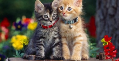 an in-depth review of the best cat collars of 2018