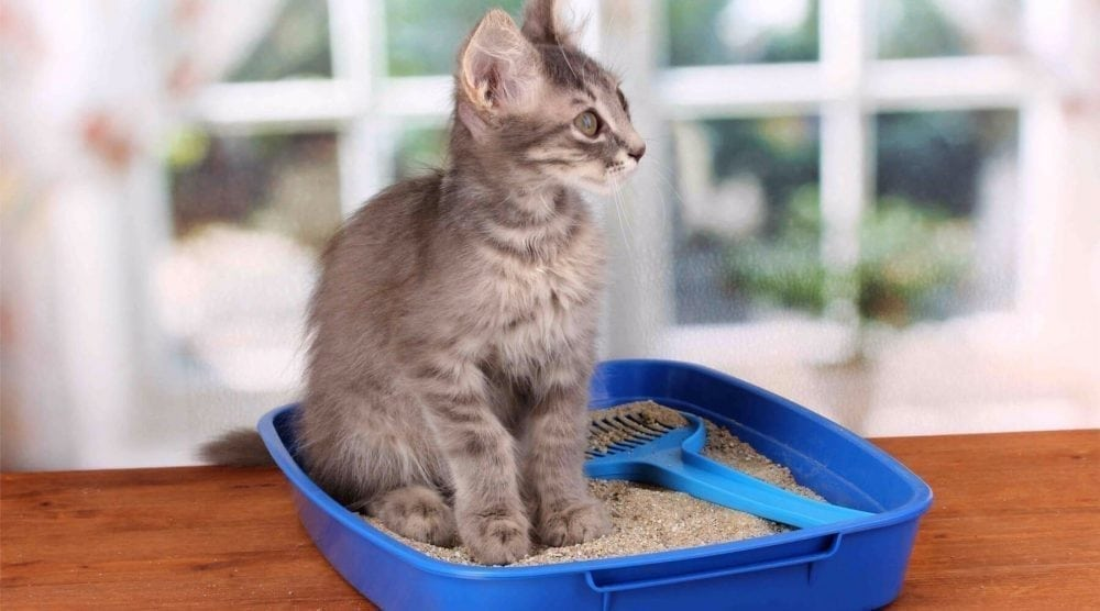 an in-depth review of the best cat litters of 2019.