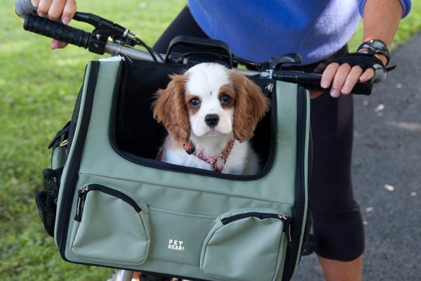 an in-depth review of the best dog carriers of 2019.