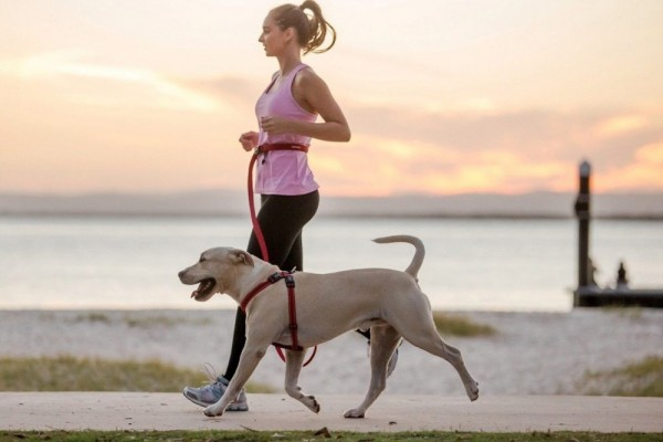 an in-depth review of the best hands-free leashes of 2018.