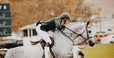 an in-depth review of the best saddle pads of 2018.