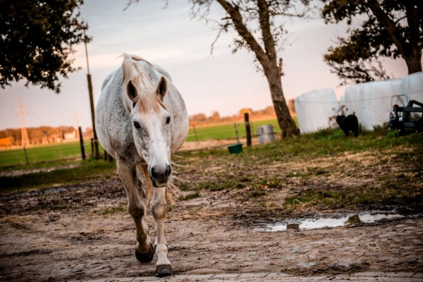 an in-depth review of the best horse shampoos of 2018.