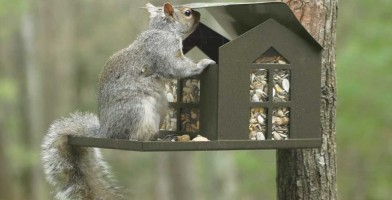 an in-depth review of the best squirrel feeders of 2019