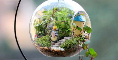 An in-depth review of the best terrariums