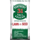 Kentucky 31 Tall Fescue