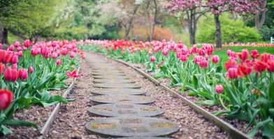 An in-depth review of the best bulb planters in 2018
