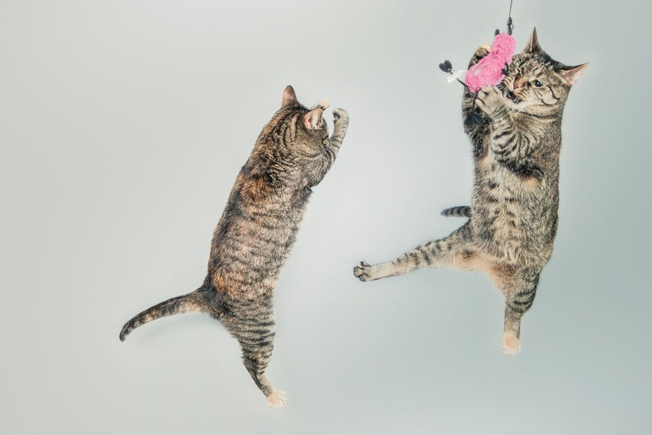 An in-depth review of the best cat toys on the market in 2019.