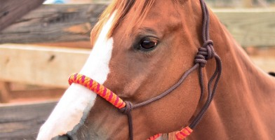 An in-depth review of the best rope halters in 2019