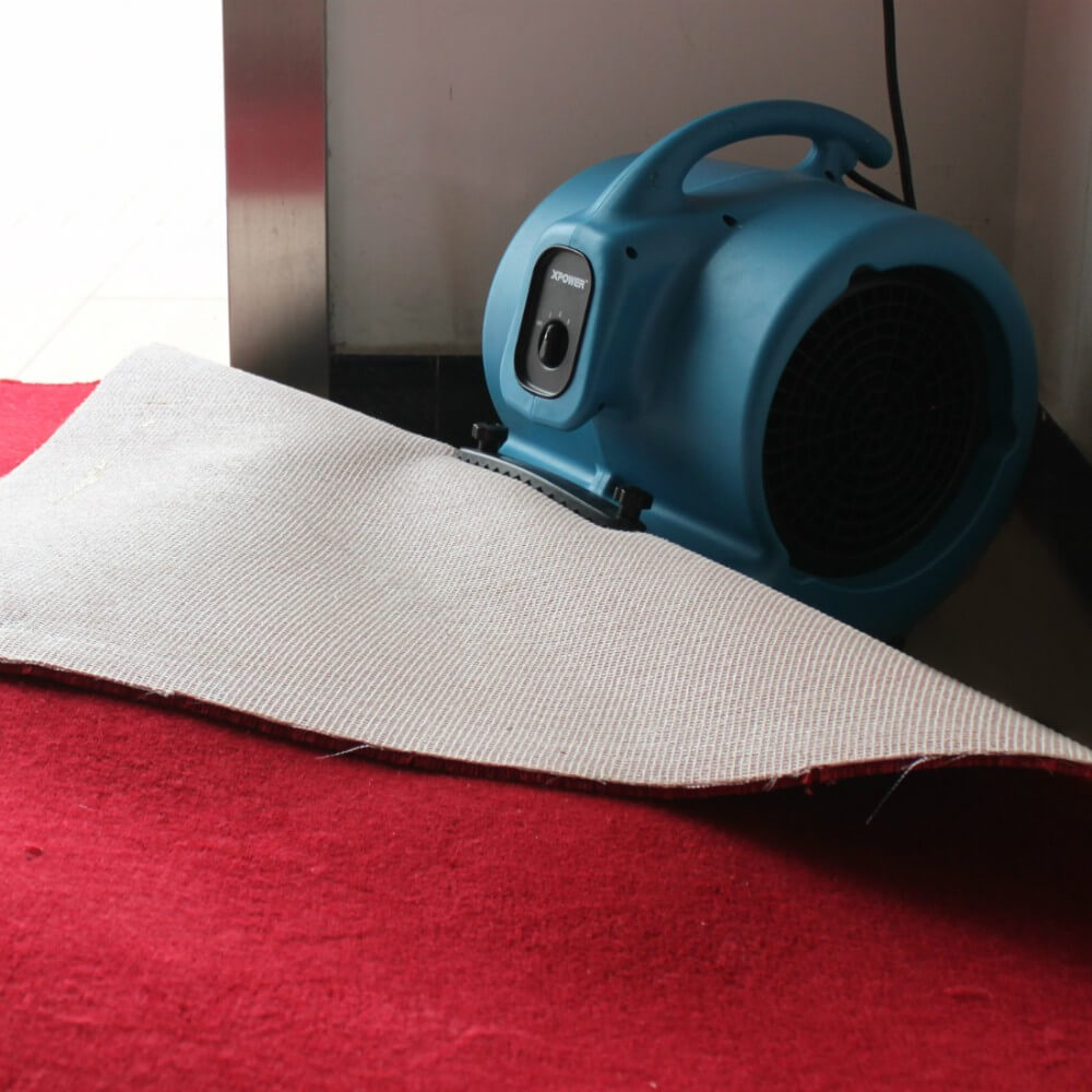 An in-depth review of the best carpet dryers in 2018