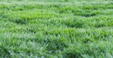 An in-depth review of the best lawn aerators available in 2018.