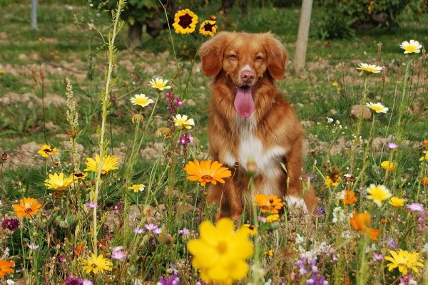 An in-depth review of the best allergy medicines for dogs in 2018