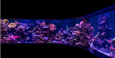 An in-depth review of the best aquarium lights available in 2018.