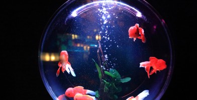 An in-depth review of the best fish tanks available in 2018.