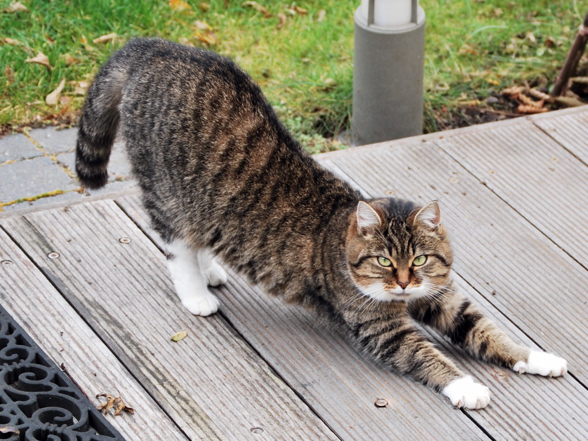 An in-depth review of the best cat deterrents available in 2018.