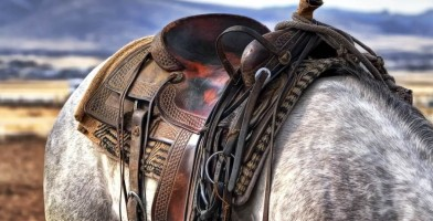 An in-depth review of the best Western saddles available in 2018.