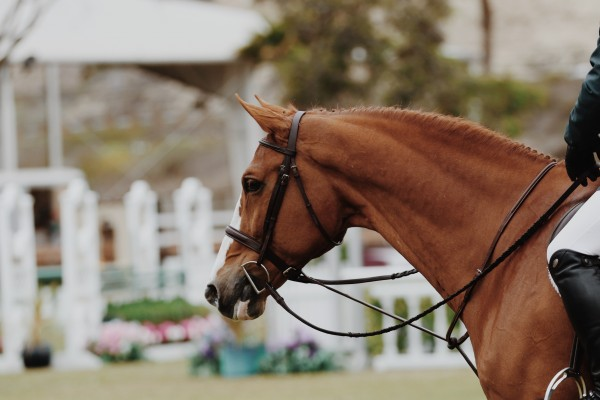 An in-depth review of the best English saddles available in 2019.
