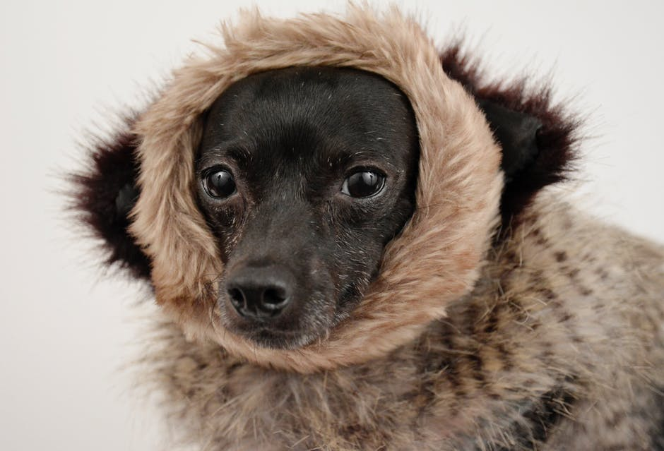 An in-depth review of the best dog jackets available in 2019.