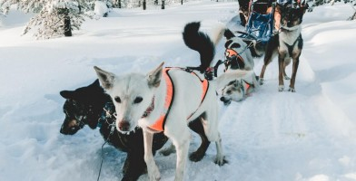 An in-depth review of the best winter coats for dogs.