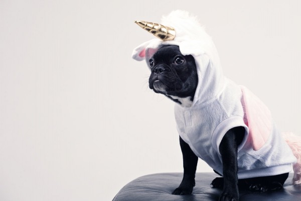 An in-depth review of the best dog costumes available in 2019.