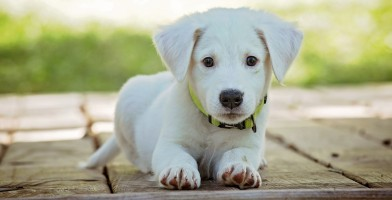 An in-depth review of the best dog flea collars available in 2019.