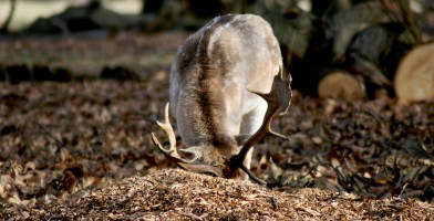 An in-depth review of the best deer food plots available in 2019.