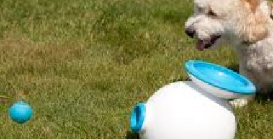 An in-depth review of the best interactive dog toys in 2019