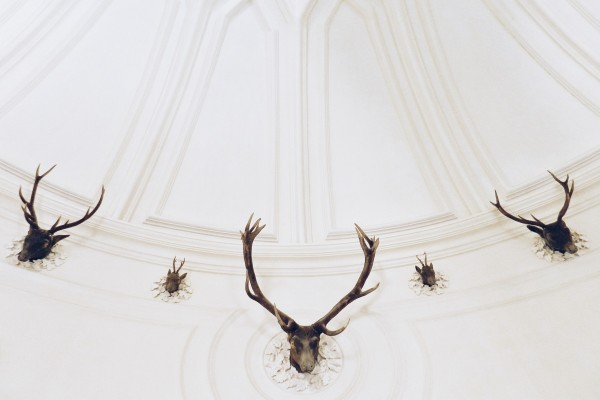 An in-depth review of the best antler mounting kits available in 2019.
