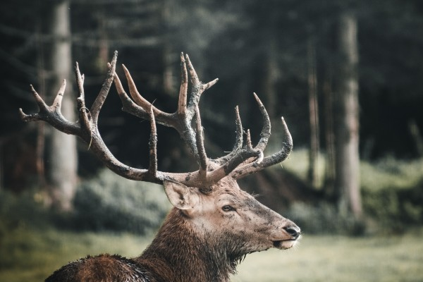 An in-depth review of the best elk calls available in 2019.