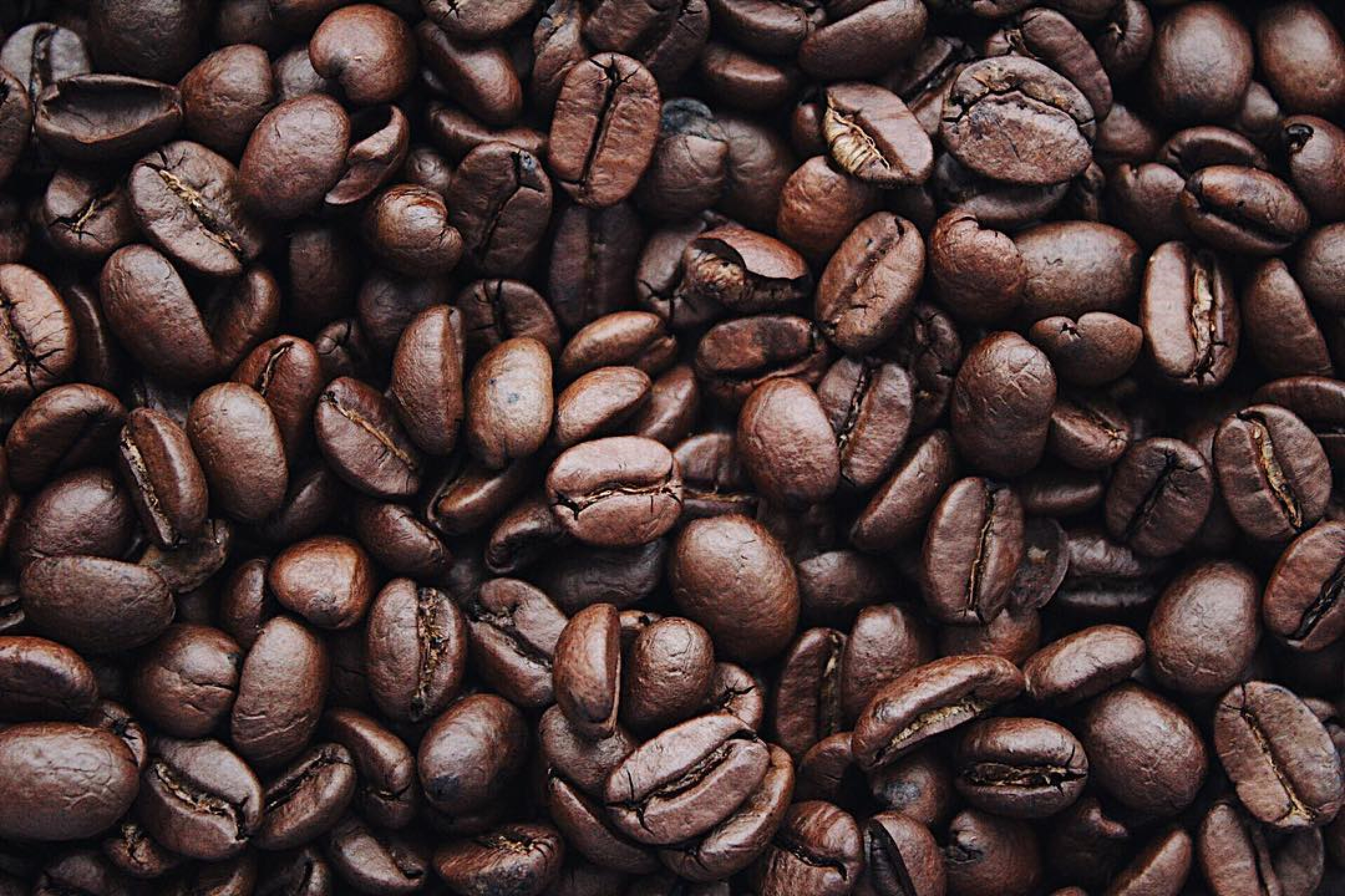 An in-depth review of the best decaf coffee beans available in 2019.