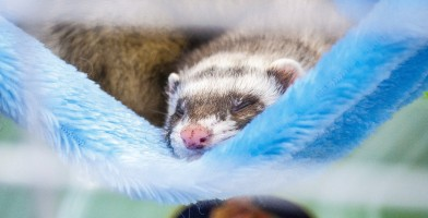 An in-depth review of the best ferret cages available in 2019.