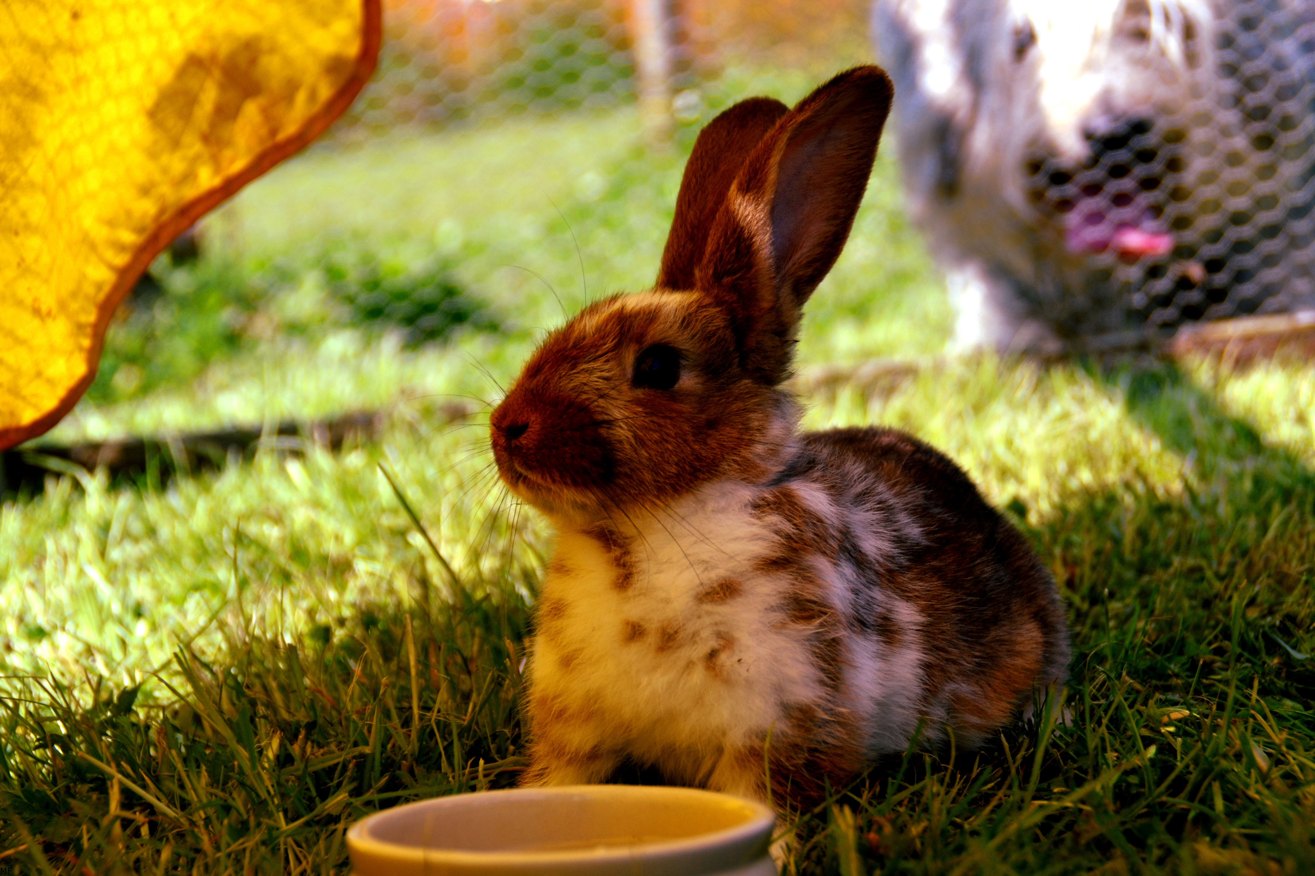 An in-depth review of the best rabbit pellets available in 2019.