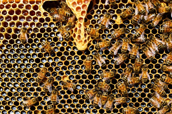 An in-depth review of the best bee hives available in 2019.