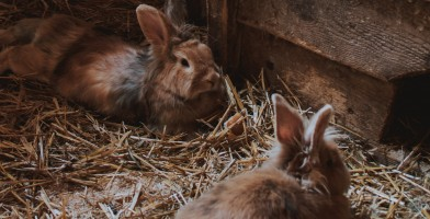 An in-depth review of the best rabbit hay feeders available in 2019.