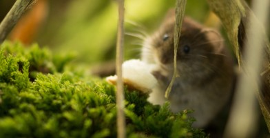 An in-depth review of the best hamster playgrounds available in 2019.